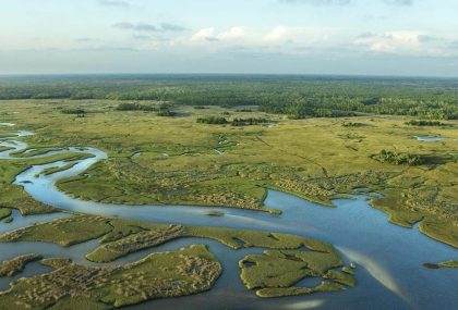 Things to do in the Florida Everglades