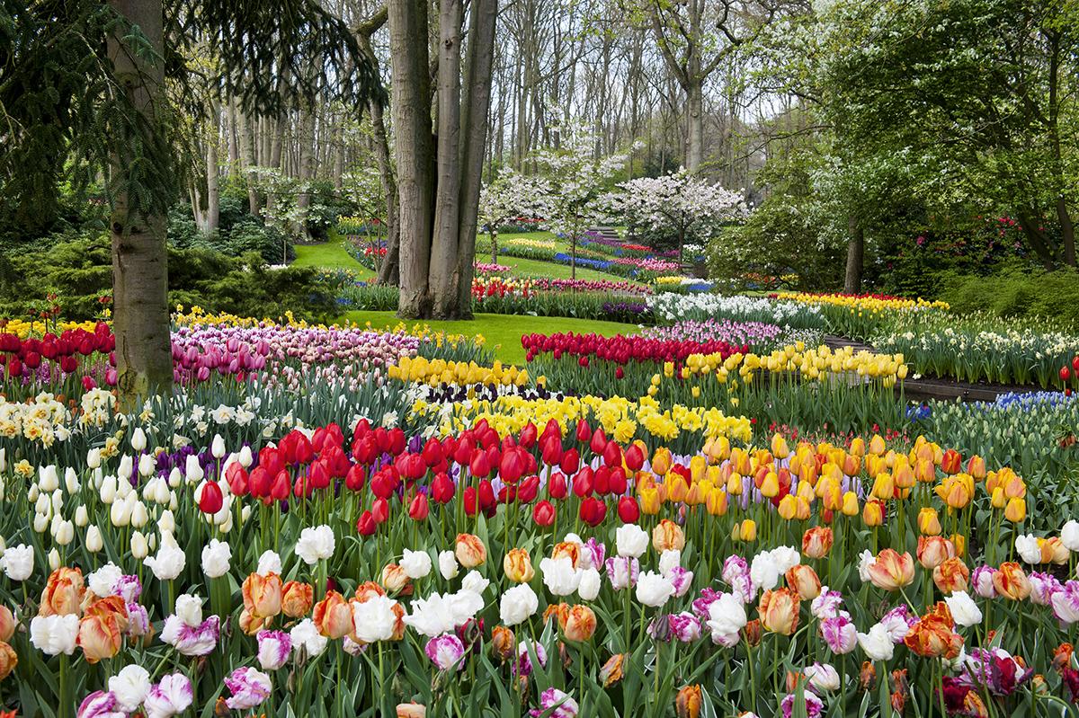 Nozze floreali nei Paesi Bassi