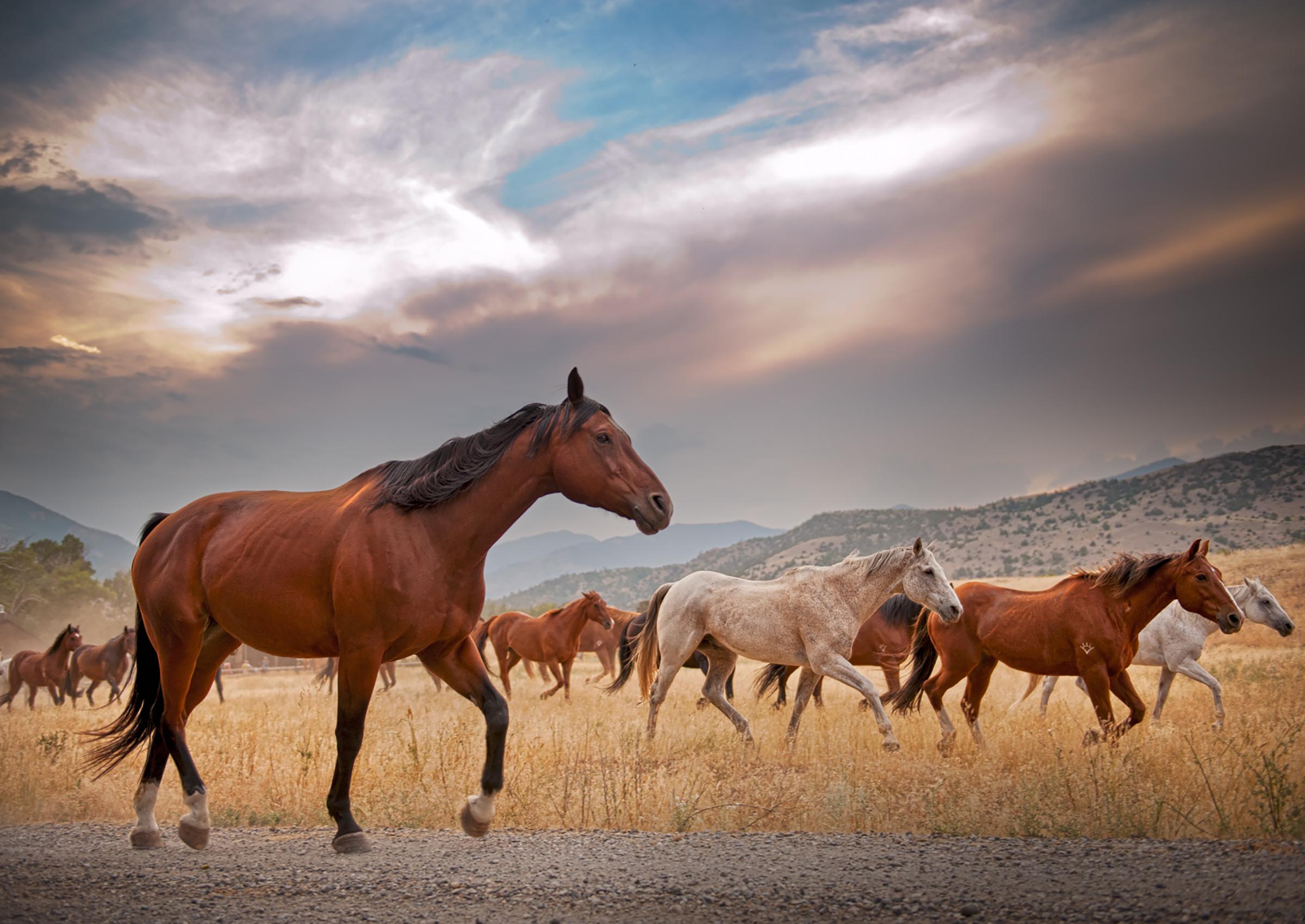 Cabalgar en ranchos en Canad y Estados Unidos
