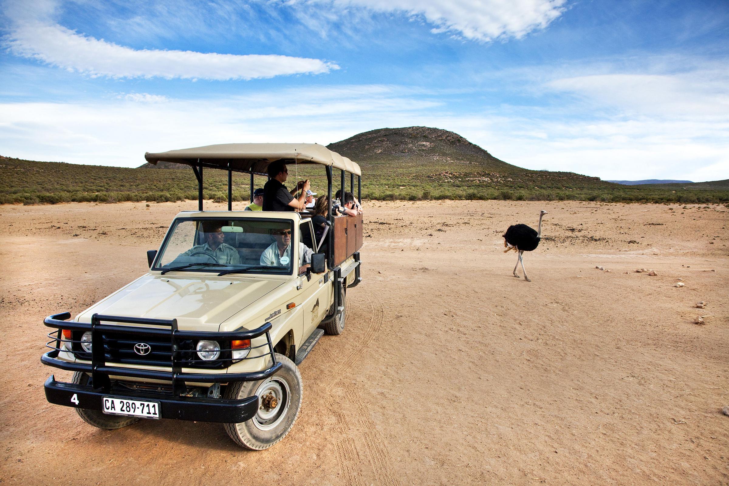 A dos horas de Ciudad del Cabo Safari en la Reserva de caza privada Aquila