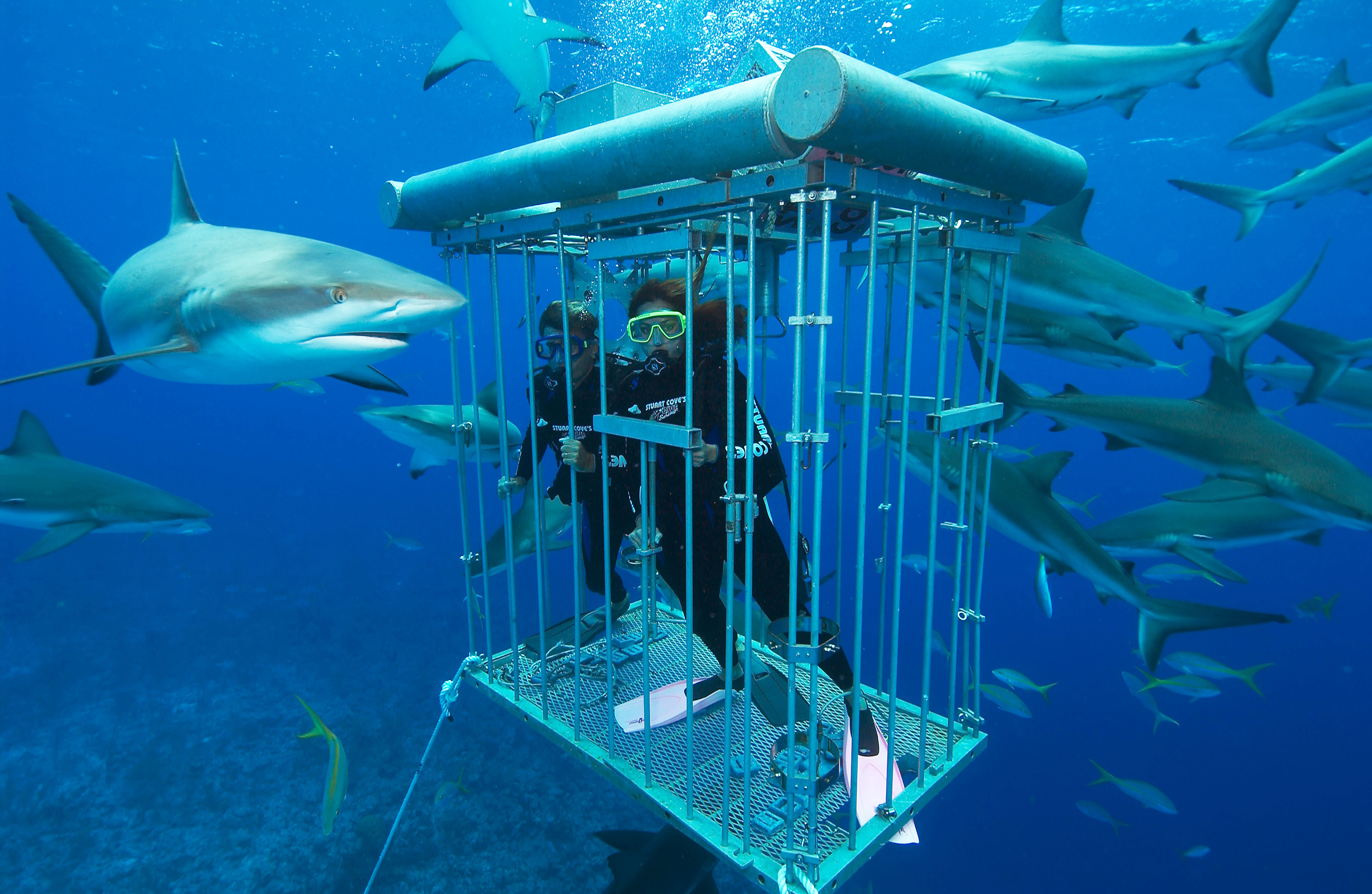 Shark diving adventure travel safety first