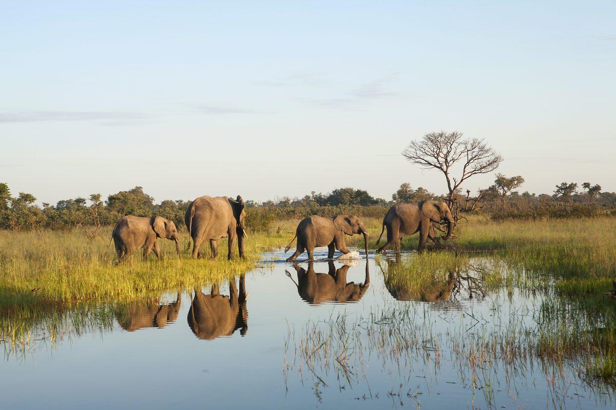 Botswana elephants green destination