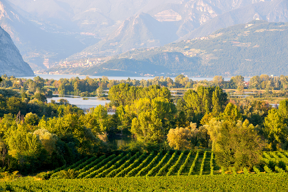 Landscape of vineyards a lake and mountains