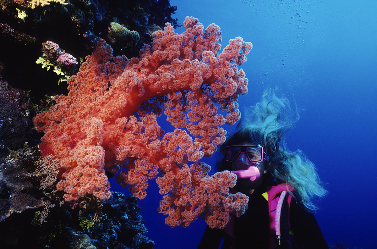 Diver looking at red soft coral